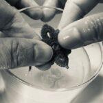 Entretien et nettoyage de bijoux dentelle au crochet